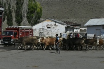 Livestock market on the road out of Kars